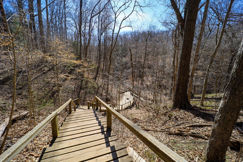 The one hundred and forty steps of trail 3 in Turkey run state park indiana