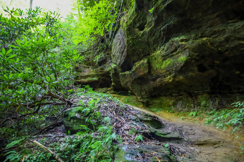 rockshelter within silvermine arch in red river gorge