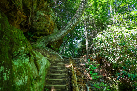 silvermine arch trail in red river gorge