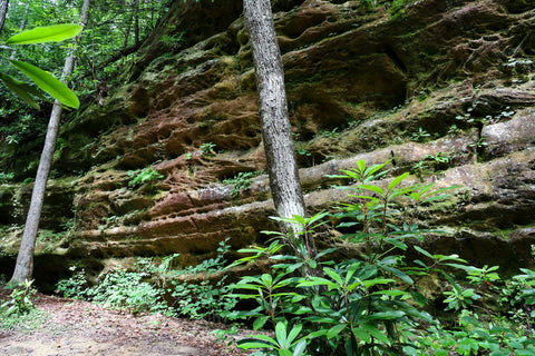 sandstone bluffs along Hazard Cave trail in Pickett CCC State Park