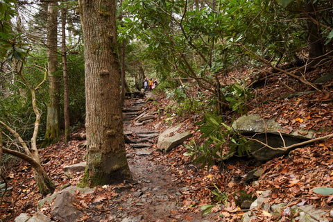 rough ridge section of the tanawha trail on the blue ridge parkway