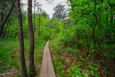 Climbers loop trail through wetland seep bog in foster falls within south Cumberland State Park in Tennessee