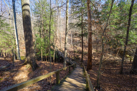Wooden boardwalk along trail 9 descending into boulder canyon in Turkey run state park indiana