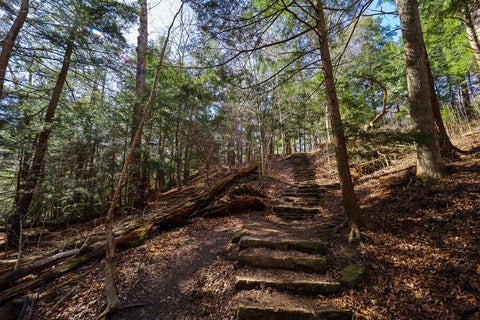 Staircase connecting trail 5 to trail 9 in Turkey Run State Park Indiana