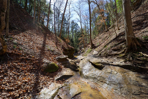 Hiking through deeply cut ravines along trail 3 in Turkey run state park indiana