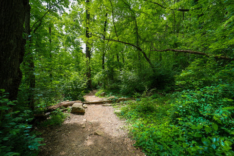 Hiking along the Glen falls trail in Lookout mountain Tennessee