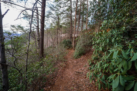 Star gap Arch trail in red River Gorge Kentucky