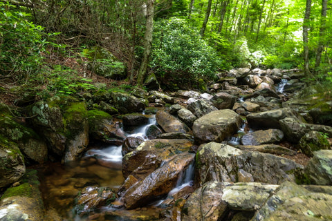 cabin creek along the cabin creek trail in grayson highlands state park in virginia