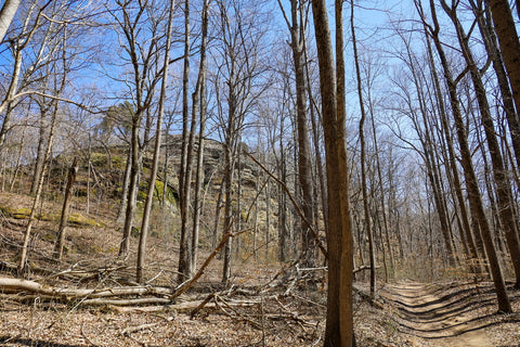 lower trails with sandstone bluffs of jeffreys cliffs above the forest Kentucky