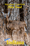 Harrison-Crawford Stare Forest Indiana Whitetail Deer Poster
