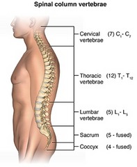 lumbar spine back pain