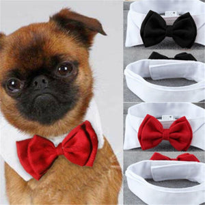 Adjustable Pet Bow Tie - Petacco