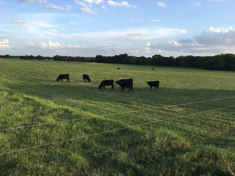 tan ranch uses Gallagher electric fence wire
