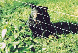 bear netting for beehives electric fence
