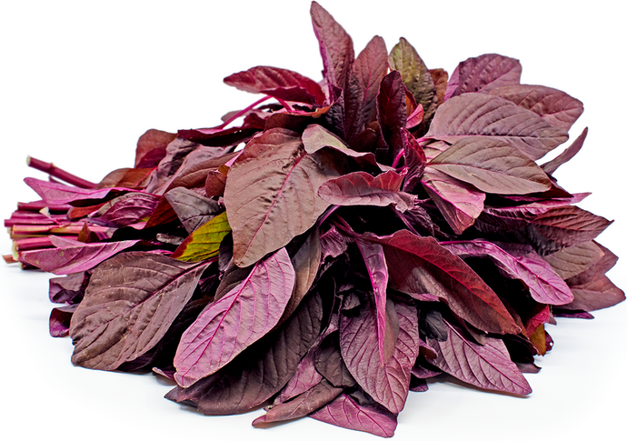 Red Amaranthus(Hydroponically Grown)