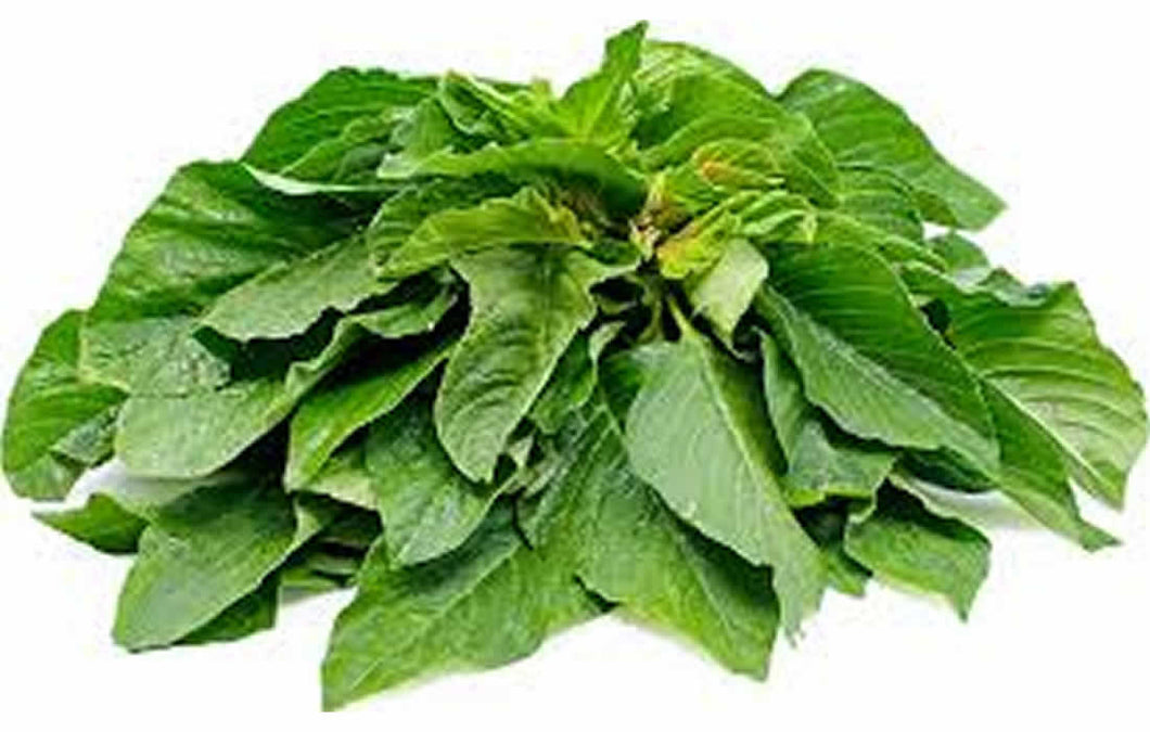 Green Amaranthus (Hydroponically Grown)