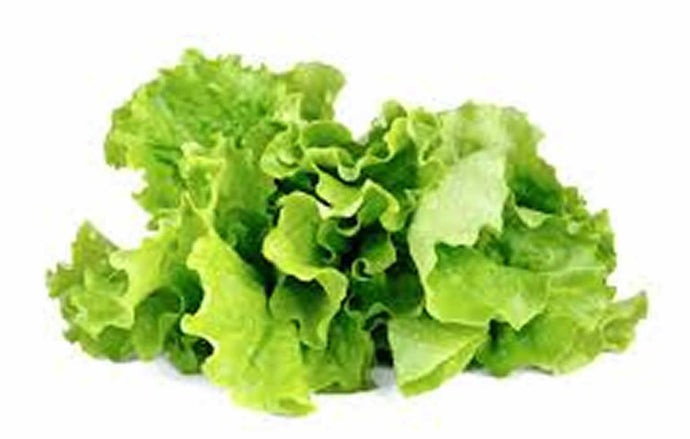 Green Lettuce(Hydroponically Grown)