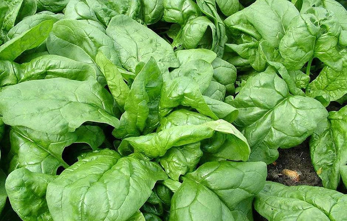 Spinach(Hydroponically Grown)