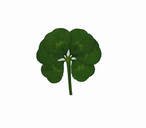 Real Genuine Six Leaf Clover