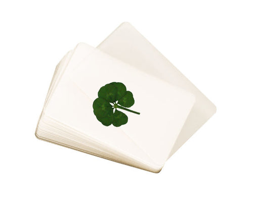 Laminated Real Genuine Six Leaf Clover