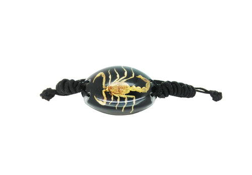Real Scorpion Black Bracelet