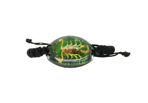 Real Scorpion Green Bracelet