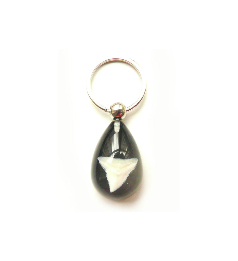 Lucky Real Sharks Tooth Black Keyring Keychain