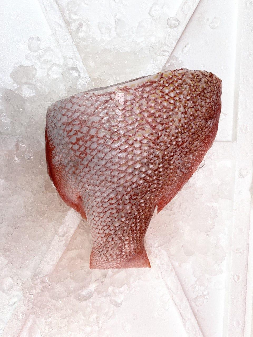 Emperor Red Snapper, Tail Section, Fresh