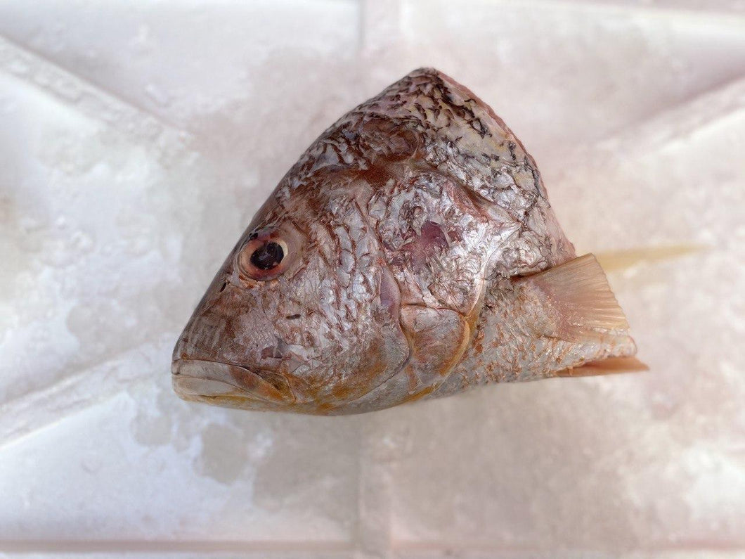 Golden Snapper, Fish Head, Fresh
