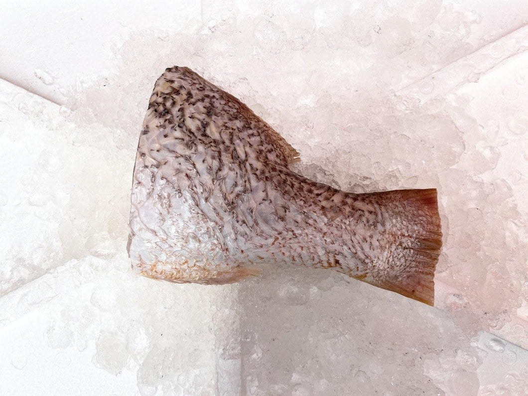 Golden Snapper, Tail Section, Fresh
