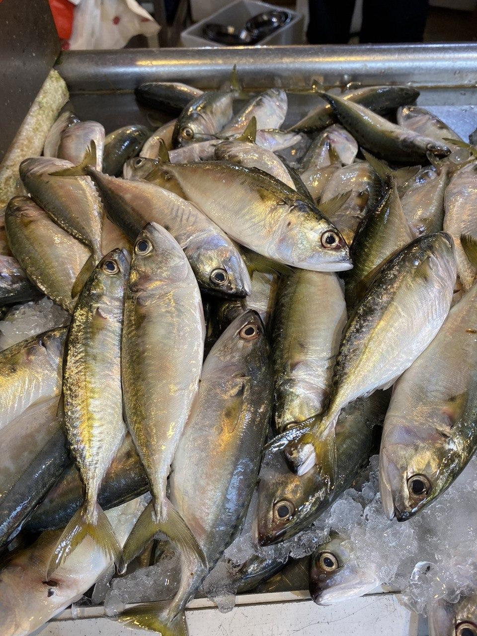 Ikan Batu, Whole, Fresh