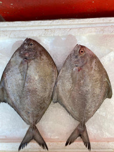 Black Pomfret, Whole, Fresh