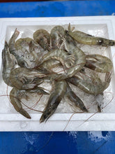 Load image into Gallery viewer, Grey Prawns, Fresh