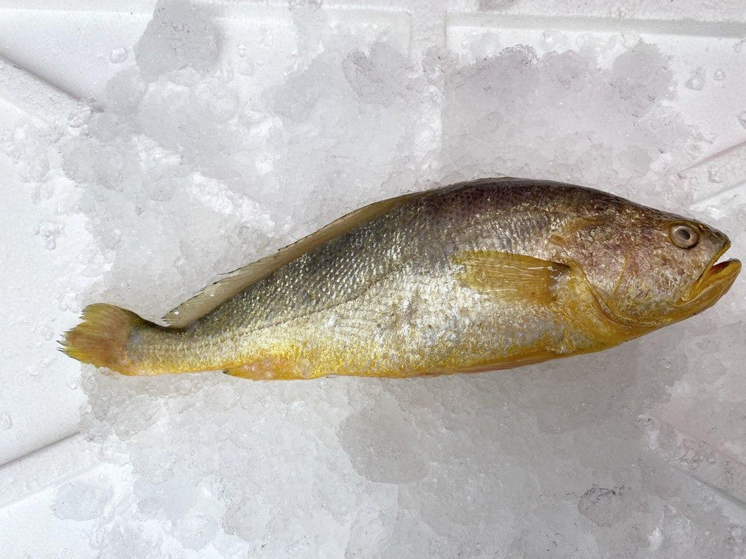 Yellow Croaker, Whole, Fresh
