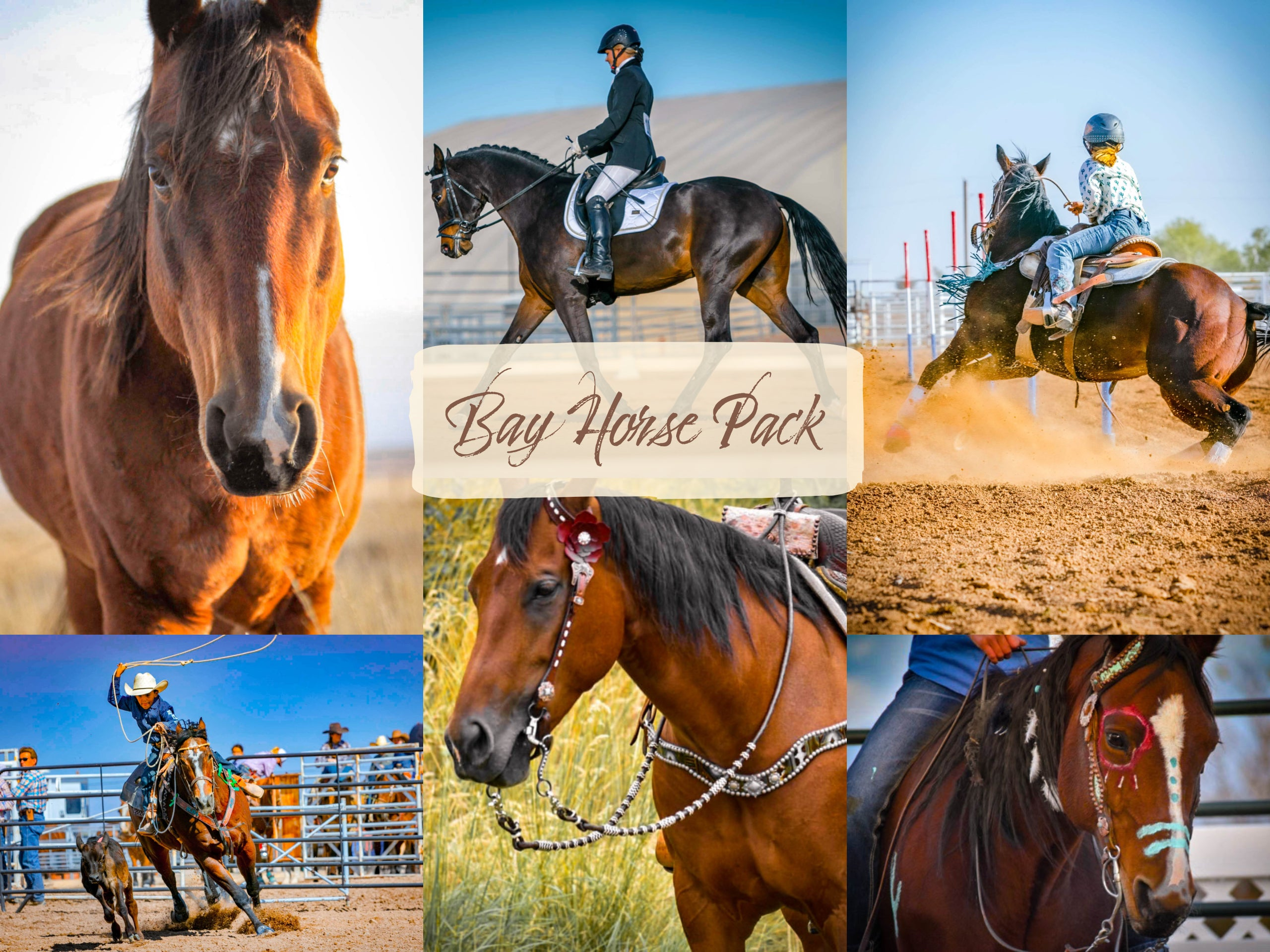 Bay Horse Pack
