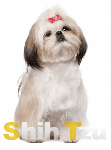 origin of the shih tzu breed