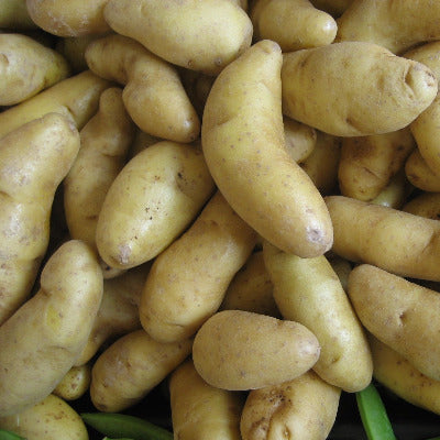 Potatoes, Yellow Fingerling - LB