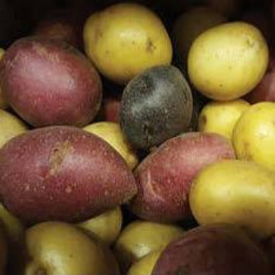 Potatoes, Assorted Marble - LB
