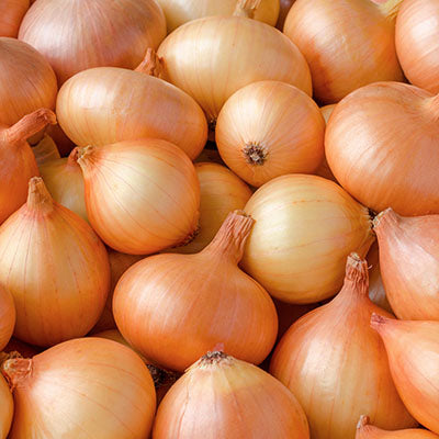Onion, Yellow - each