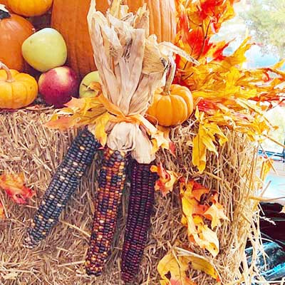 Fall Decor, Indian Corn, group of 3 ears