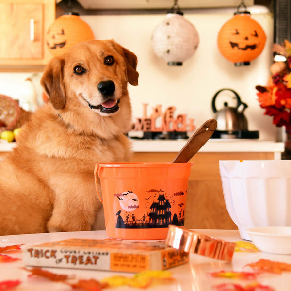 Pumpkin Cookies For Your Pup-kin!