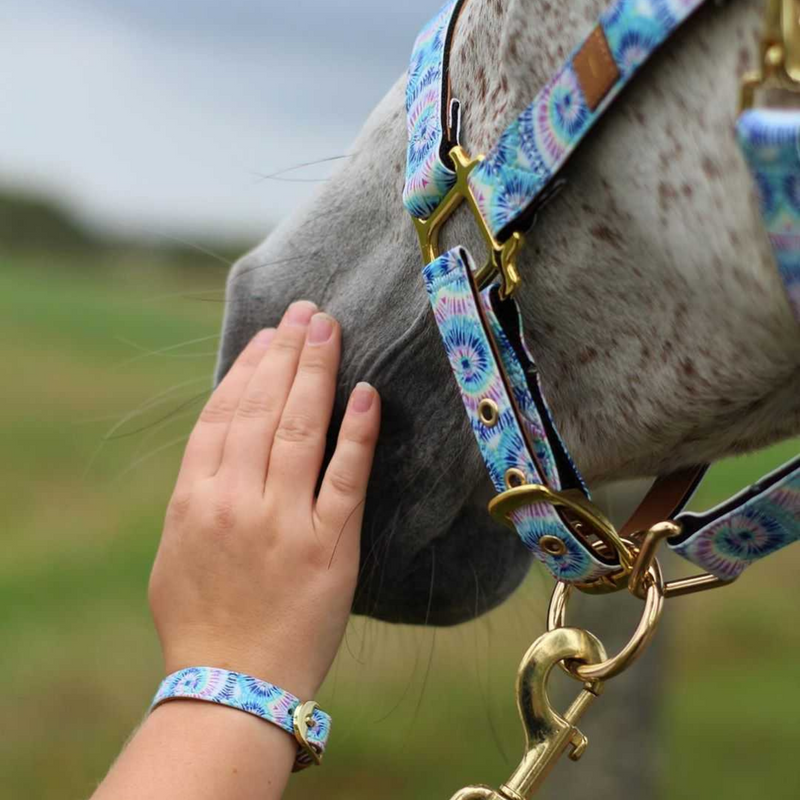Day Dream Believer - Horse Halter