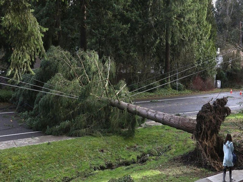 Windstorm Leaves Puget Sound Residents Without Power