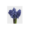 FLOWER - HYACINTHUS BOUQUET (ASSORTED COLORS)