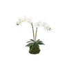 ORCHIDS WHITE 15MM TALL