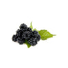 BLACKBERRIES 6OZ