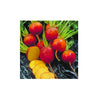 BEETS GOLDEN ORGANIC (5PC) - Fresh Produce Delivery West Vancouver