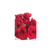 FLOWER - ROSES 6 STEMS