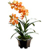 FLOWER - ORCHID 2'S ORANGE