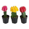 PLANT CACTUS ASSORTED